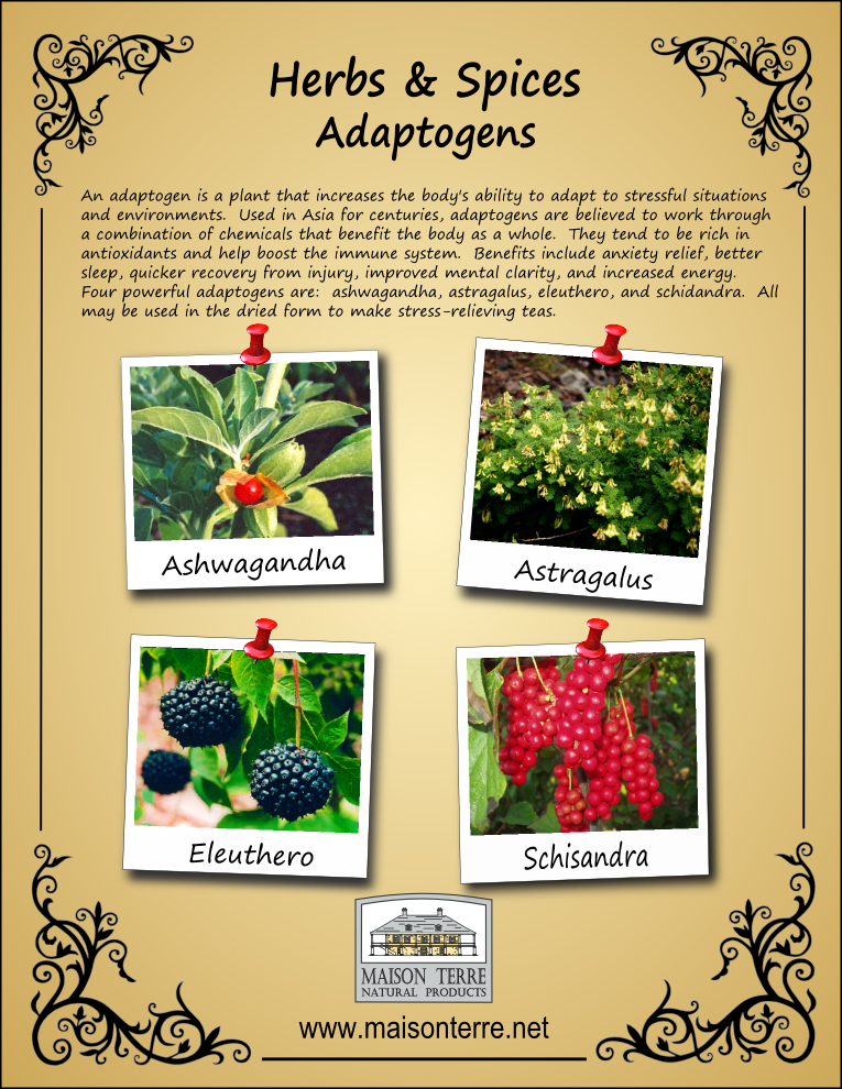 Maison Terre Adaptogens Poster by Prodigy Designs